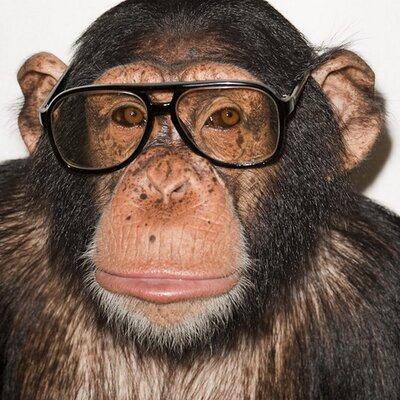chimp_port_0220_400x400