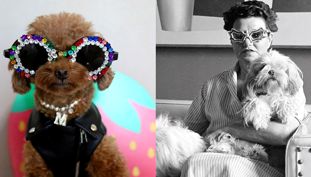 These Dogs Play Dress-Up With Art World Stars