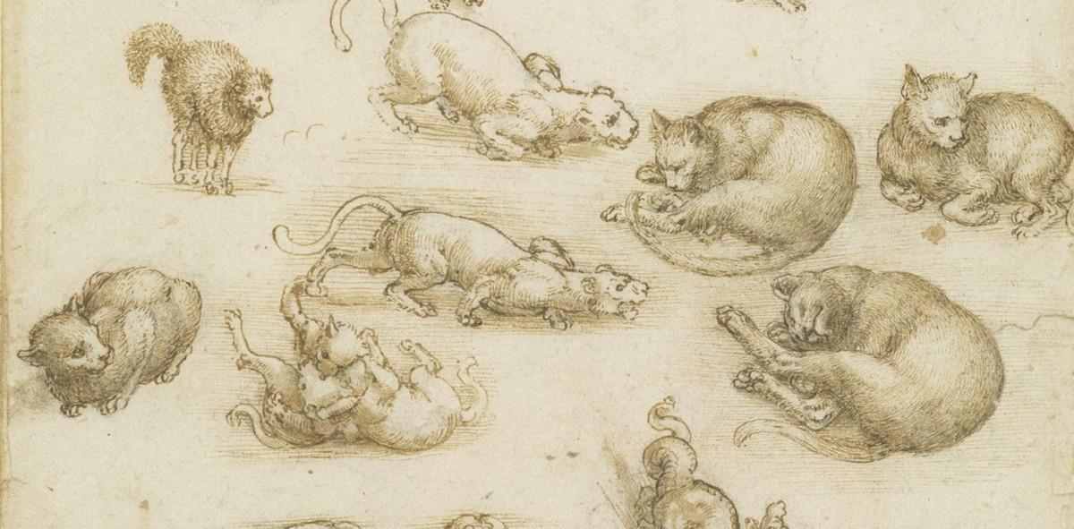leonardo animal sketch
