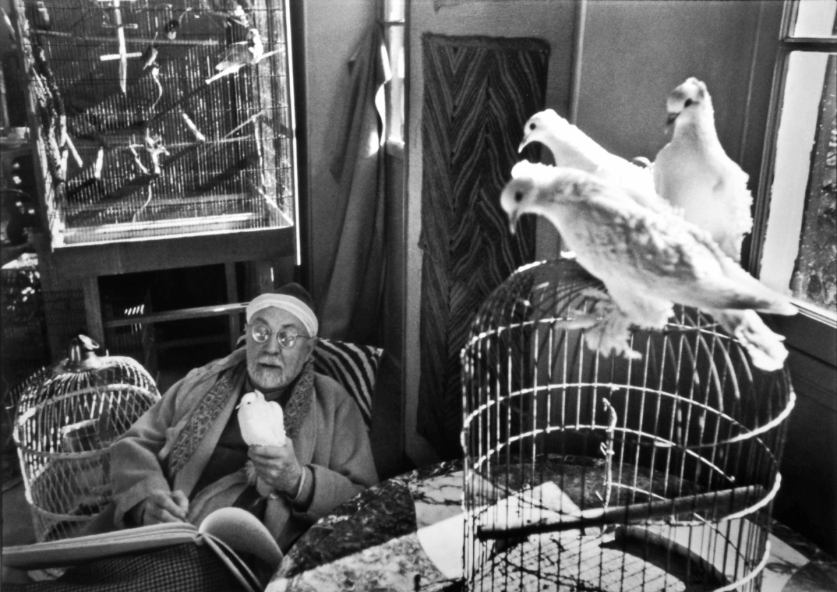 matisse and doves