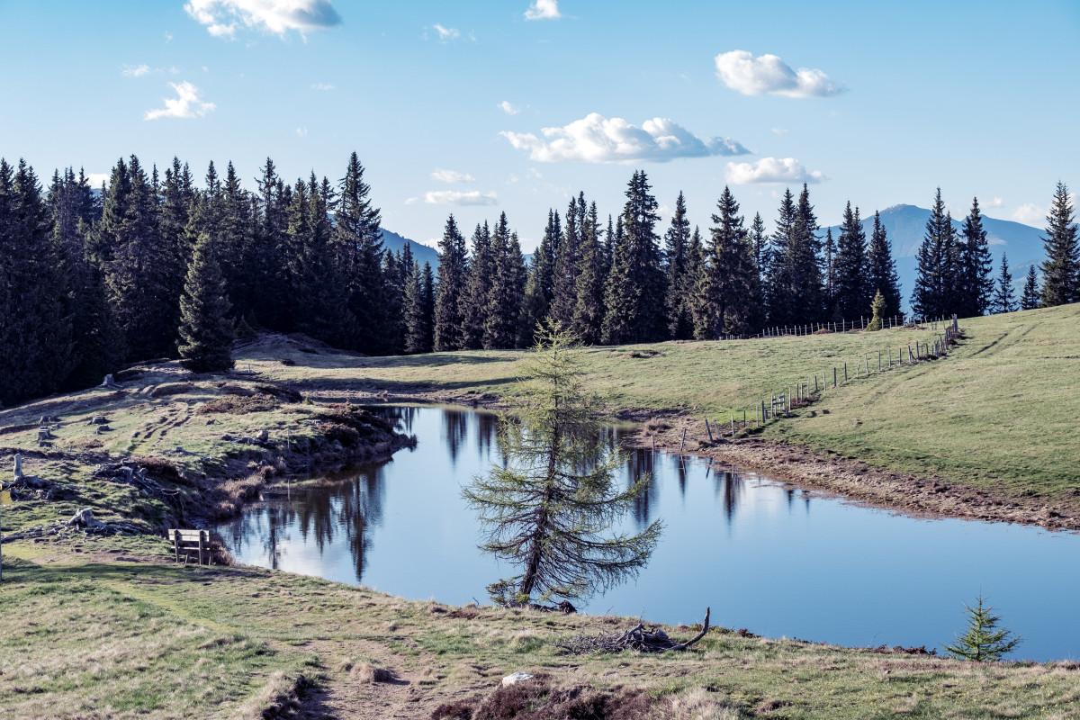(c)art-lodge landscapes (2)