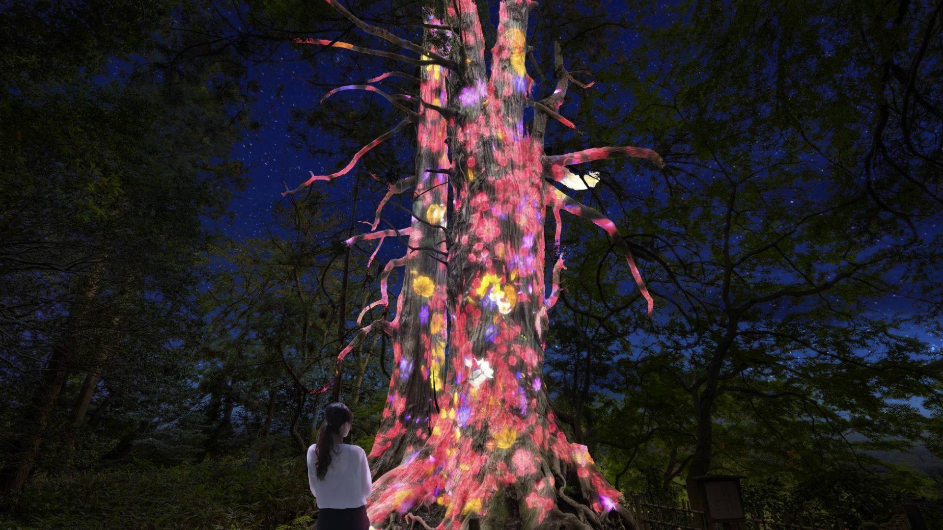 TeamLab to Digitize Japanese Garden